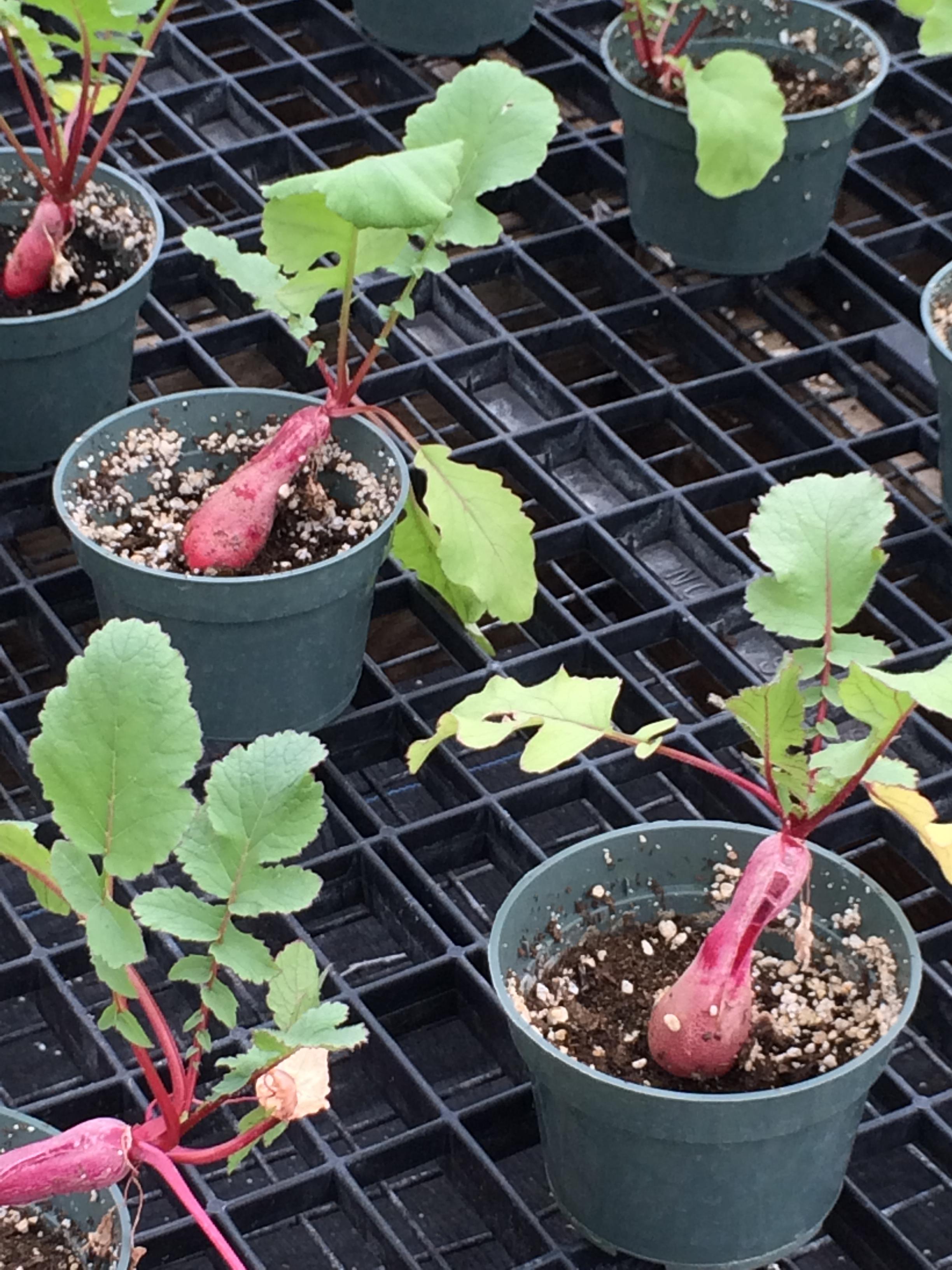 SCVT Horticultural Program 2